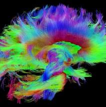 Reprograma tu cerebro y cambia tu vida